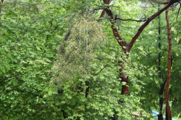 부여 만수산 자연휴양림 환상의 소나무숲 3