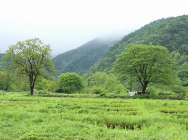 서산 보원사지 남쪽 가야산 자락 풍경