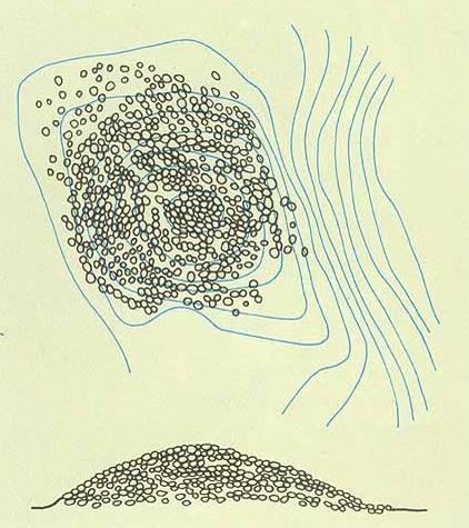 돌무지무덤 실측도. 민족문화대백과사전 사진